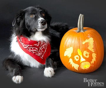Pumpkin-Carvings of Dogs - Border Collie