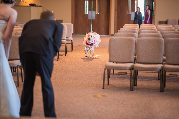 Bella joined her owner at the wedding ceremony