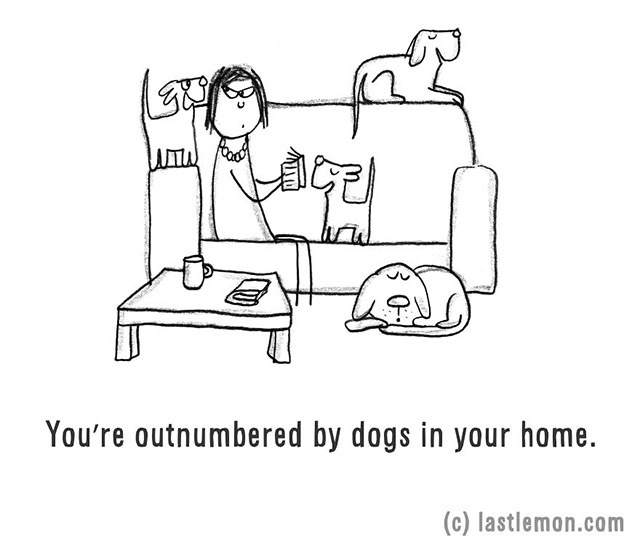 You're outnumbered by dogs in your home