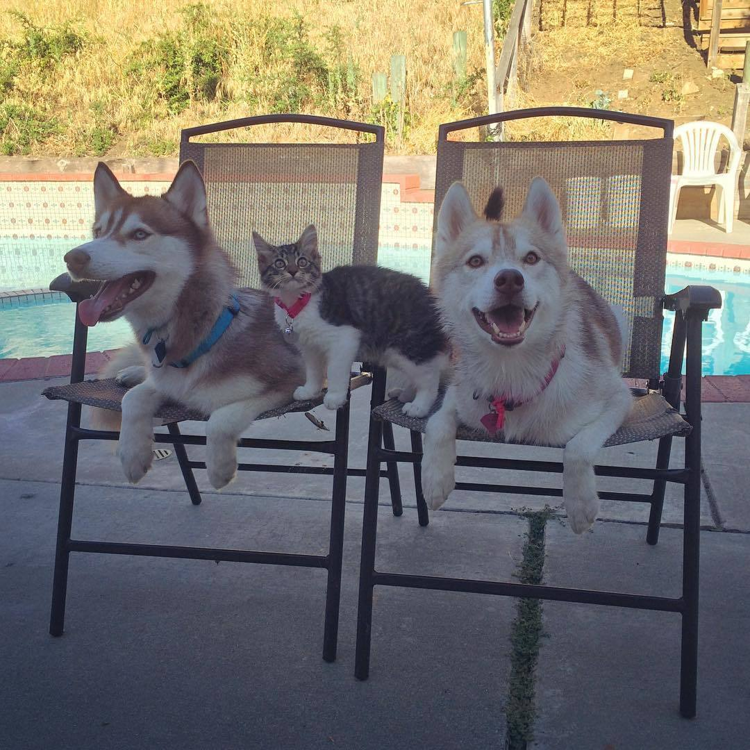 Rosie and her Husky family