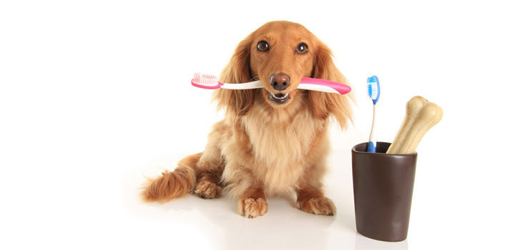 Clean your dog's teeth on a daily basis