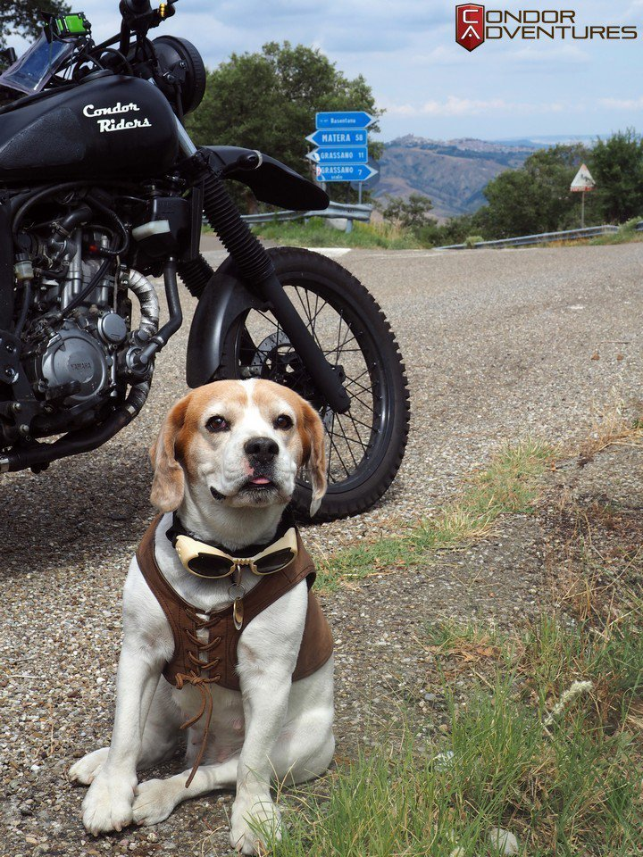 The dog who enjoys travelling by motorcycle