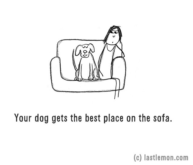 Your dog gets the best place on the sofa