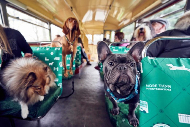 Bus tour for dogs in London