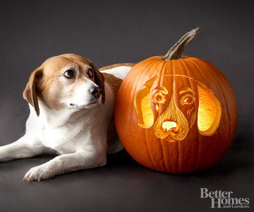 Pumpkin-Carvings of Dogs - Beagle