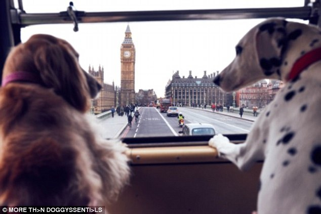 London bus tour for dogs and dog lovers