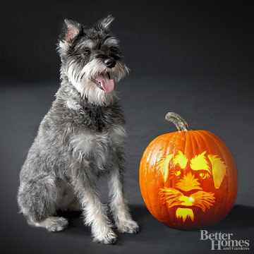 Pumpkin-Carvings of Dogs - Schnauzer