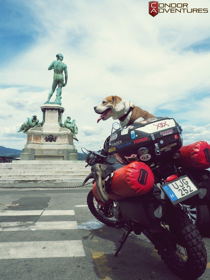 Dog on board: Brigi in Florence