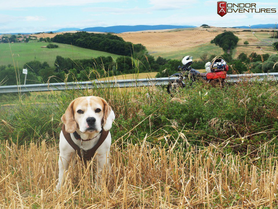 Exploring romantic Tuscany with a dog