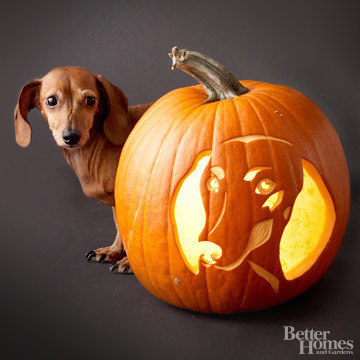 Pumpkin-Carvings of Dog - Dachshund