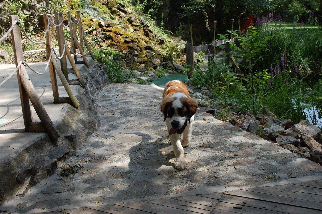 Dog friendly Öko-Park Holiday Camp and Adventure Park with a vast area waiting upon all two- and four-legged guests