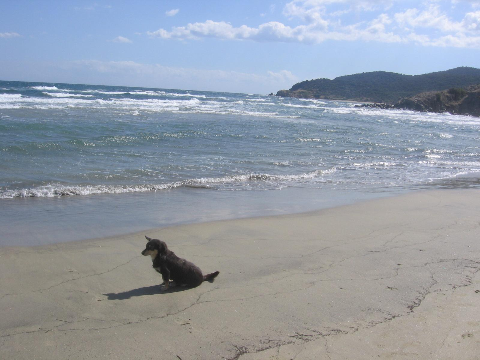 Kormi (Blacky) the lonely mutt on the Greek beach
