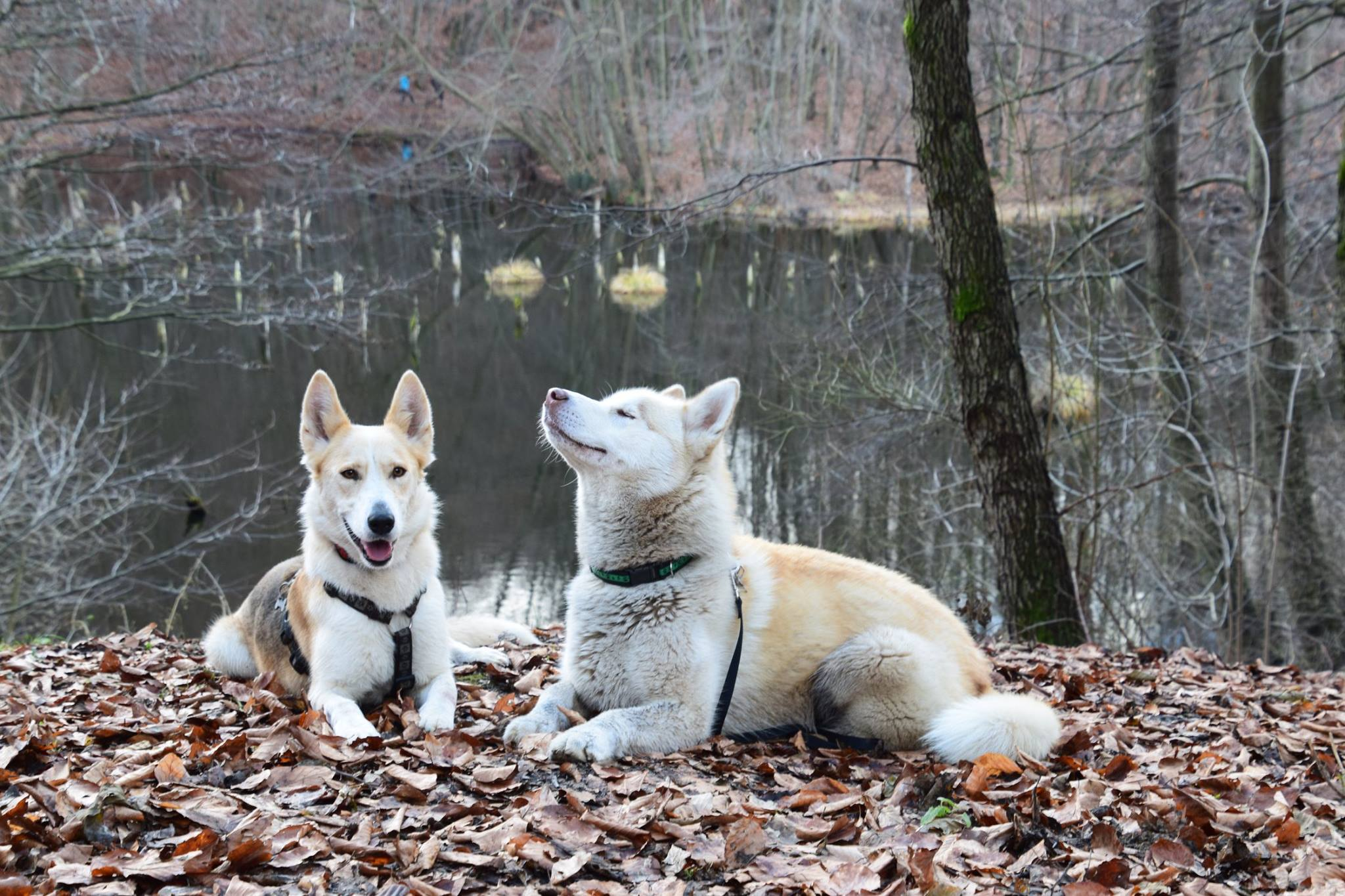 Dogs enjoy going on hikes – millions of smells await to be discovered by their noses