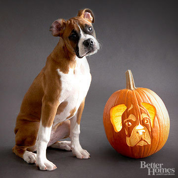 Pumpkin-Carvings of Dogs - Boxer