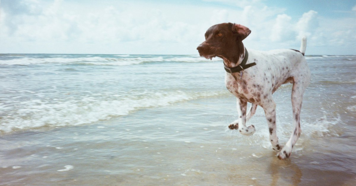 Going to the dog beach – 4 tips for an unclouded experience