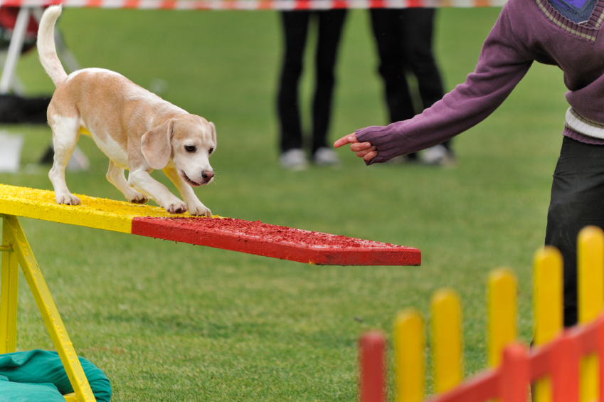 Agility, jogging, swimming... Dogs need regular exercise