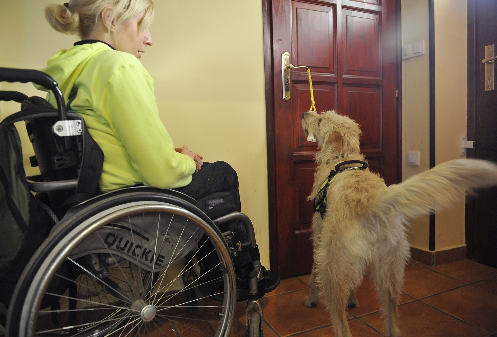 A service dog's company provides more freedom for a disabled person