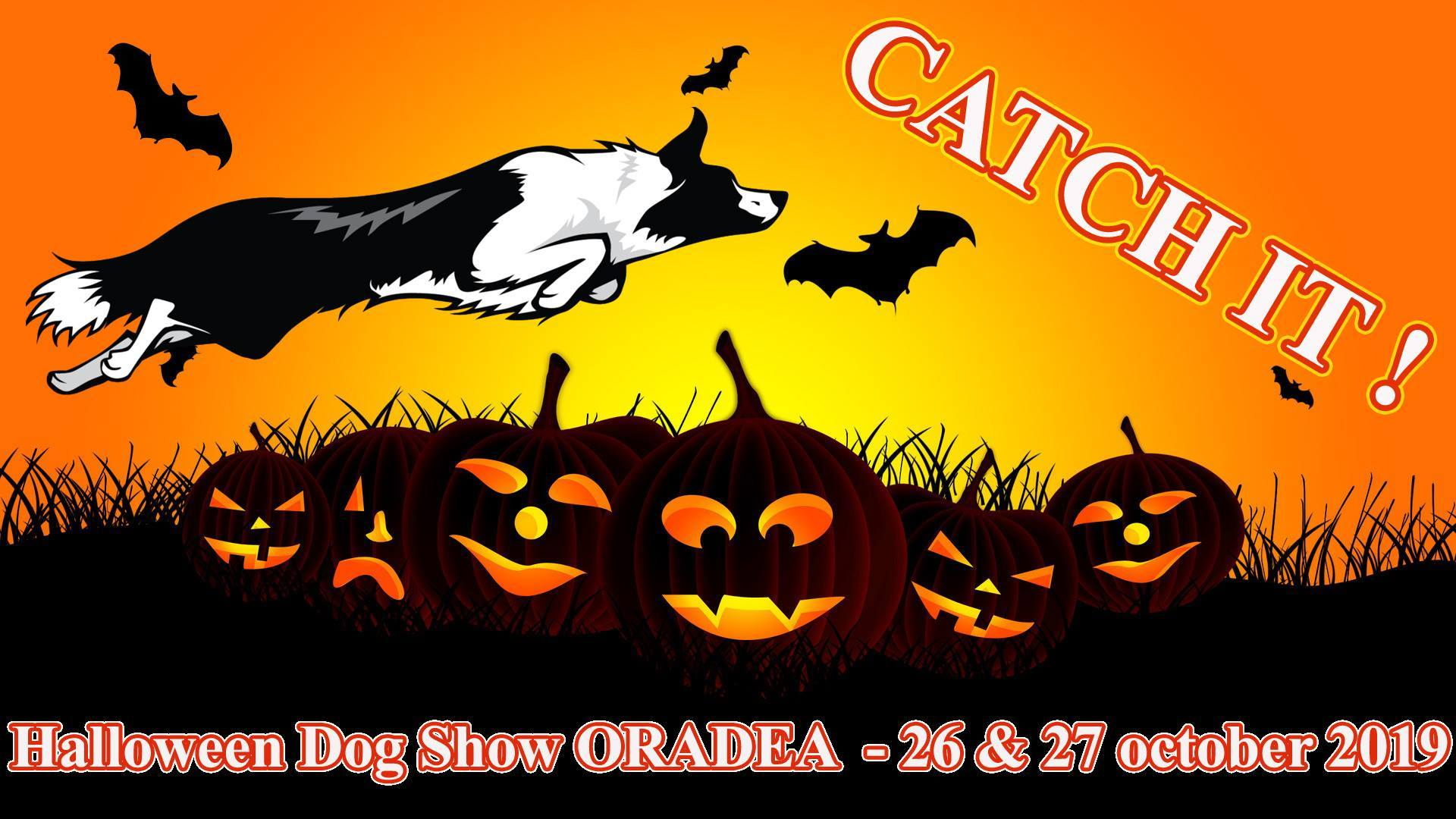2020 Dog Show.Halloween Dog Show Oradea 2020 Program Offers
