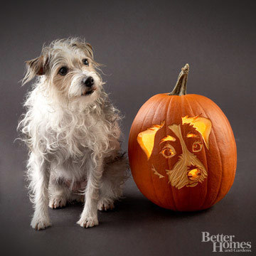 Pumpkin-Carvings of Dogs - Jack Russell