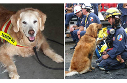 Last living rescue dog of 9/11 received Dog's Best Day
