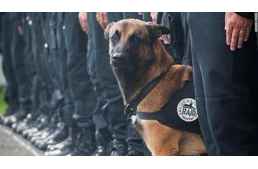 Diesel, the police dog fell victim to terrorism in France