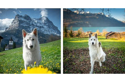 Follow This Beautiful White Dog On A Magical Journey In The Alps
