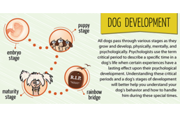 How are dogs developed?