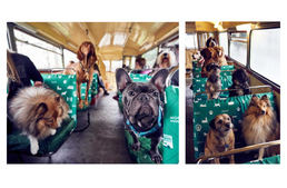 World's first bus tour for dog lovers