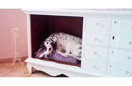 Luxurious surroundings for dogs? Yes!