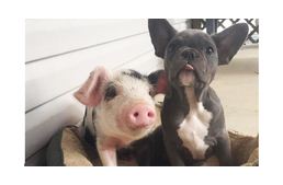 Piglet And Puppy Become BFFs