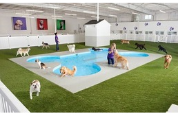 JFK Airport To Open Animal Only Terminal Complete With Luxury Dog Resort