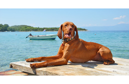 4+1 dog friendly beaches in the Island of Krk in Croatia