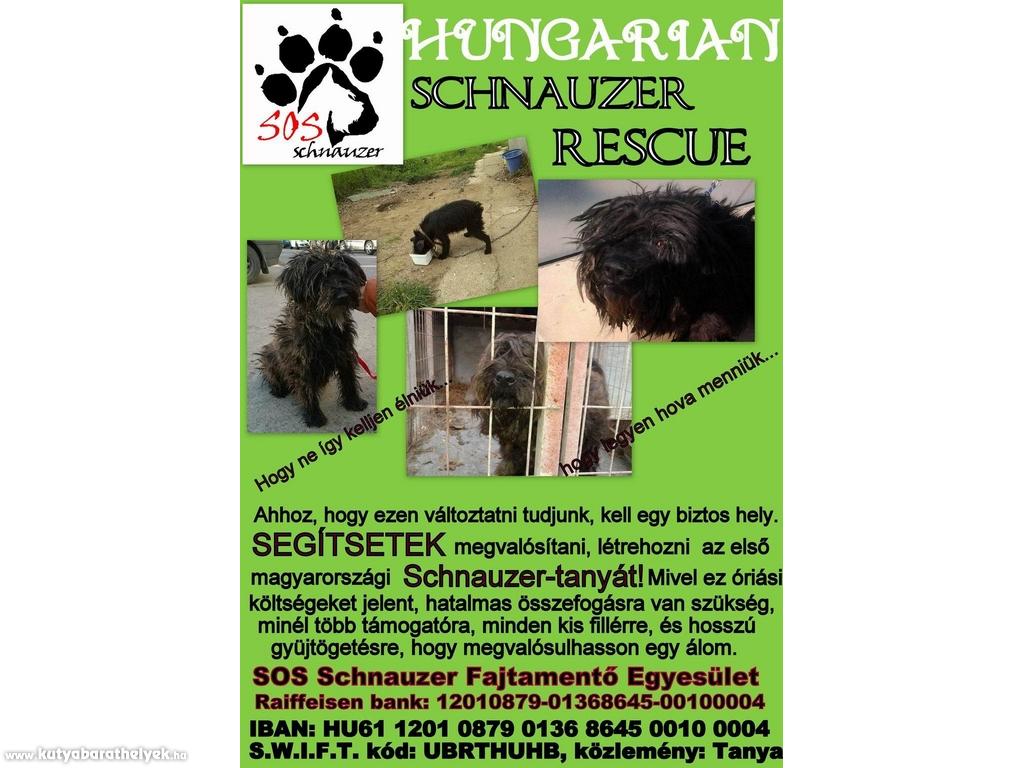 Services - Hungarian Schnauzer Rescue